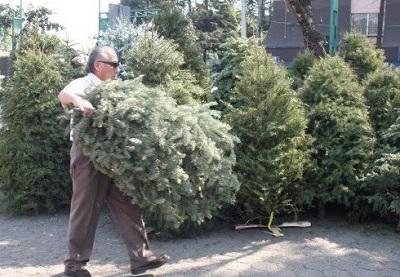 El 7 de enero iniciará el acopio de árboles de navidad en Soledad