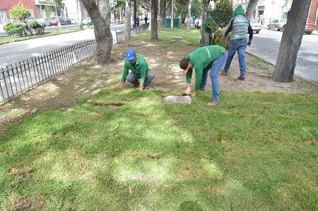 Mejora gobierno capitalino, áreas verdes de la Calzada de Guadalupe