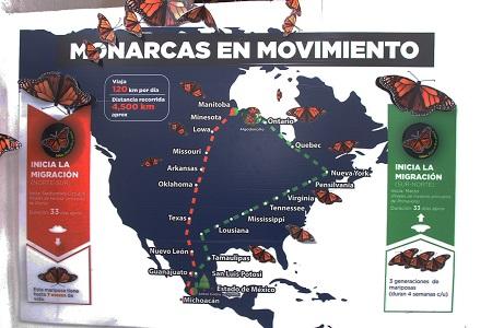 Ayuntamiento de SLP contribuye a la preservación de la Mariposa Monarca
