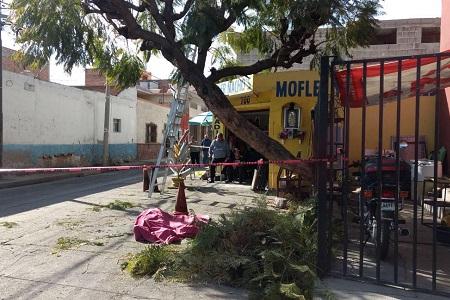 Hombre perdió la vida al caer de un árbol