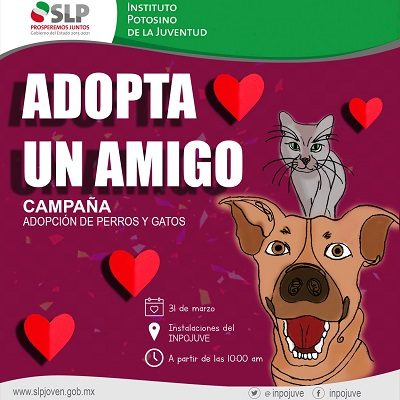 """Inpojuve prepara campaña de adopción de perros y gatos """"Adopta a un Amigo"""""""