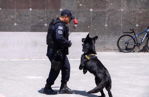 Seguridad Pública Municipal reactivó grupos de reacción en beneficio de la ciudadanía