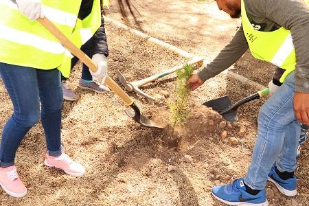 Arranca primera etapa de reforestación en Ciudad Satélite