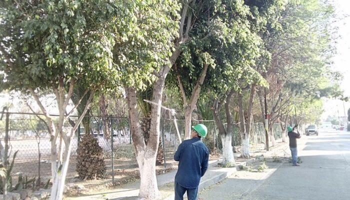Limpian 300 mil metros cuadrados de áreas verdes en la Capital